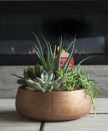 Surprise someone with this mix of unique, easy-care succulents planted in a copper container.  A Merry Christmas sign sends greetings to all.