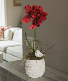 Adding beauty to holiday decor, this spectacular double-stemmed amaryllis plant in a patterned white pot is decorated with moss and a glittered bird nestled among angel vine.