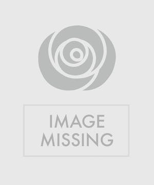 One dozen premium red roses in a glass vase accented with Christmas greens.