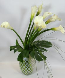A classic design of nine white calla lilies accented simply with greenery in a white swirl vase.