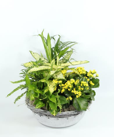 Easy to care for assorted foliage and blooming plants fill a container with natural beauty.