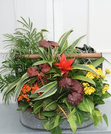 This impressive seasonal garden contains hand-selected easy care plants in a rustic, wooden-handled galvanized tin garden tote create a unique look.