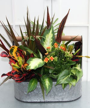 Celebrate the change of seasons with this handcrafted garden.  Easy care plants fill a rustic, wooden-handled galvanized tin garden tote creating a unique look.