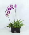 Gainan's Orchid Garden