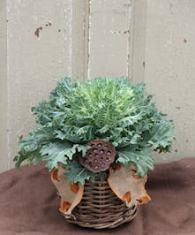 This bushel basket features a long-lasting, cold tolerant kale plant.  As the temperature drops, this plant becomes more colorful brightening any entry way.