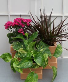 A selection of two green and one beautiful blooming plant in terra cotta square planters covers all the bases.  Turn the planters over and use them for candle holders.