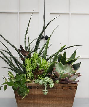 A stunning array of exotic succulents planted in a wooden box with accents of natural rock and wood creating a unique garden gift.