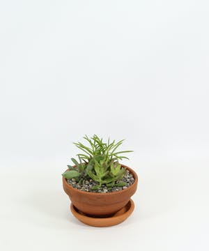 Add a bit of welcome to a home or office with this clay pot filled with unique succulents.