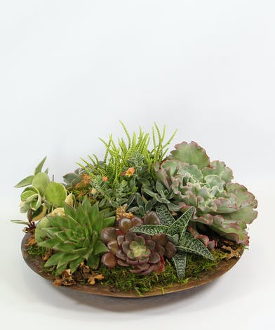 Full of sun-loving succulents, a clay bowl adds a nice touch to a desk or table.