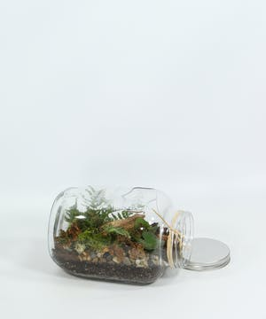 A vintage mason jar is planted with a mix of ferns and tropical plants.  A terrarium is the perfect environment for a fern.