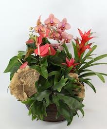 Gainan's Tropical Garden
