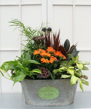 A vibrant kalanchoe gives a seasonal look to this mix of easy care plants.  Planted into an oblong metal lattice and burlap container, this garden will brighten anyone's day.