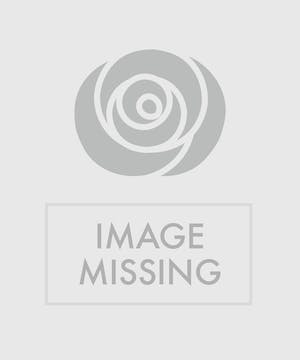 Beautiful butterfly-shaped blossoms stand tall over heart-shaped leaves in a decorative container.  It is available in shades of pink, purple and red.