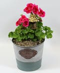 4-inch Geranium in a Tin