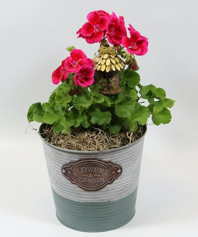 A vibrant 4-inch geranium grown in our greenhouse has lush foliage and big bold blossoms.  Tucked inside the foliage is a birdhouse.  Sure to bring smiles all season long.