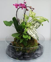 This unique presentation features a Japanese styled kokodoma with a mini orchid and green plants displayed in a rock-lined glass bowl.  Easy care.
