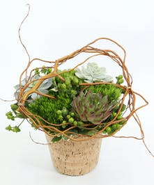 This design features three long-lasting succulents, moss green carnations, with accents and a curly willow wreath.