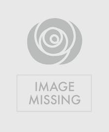 One Dozen Roses Billings, MT - Same-day delivery by Gainan's Flowers